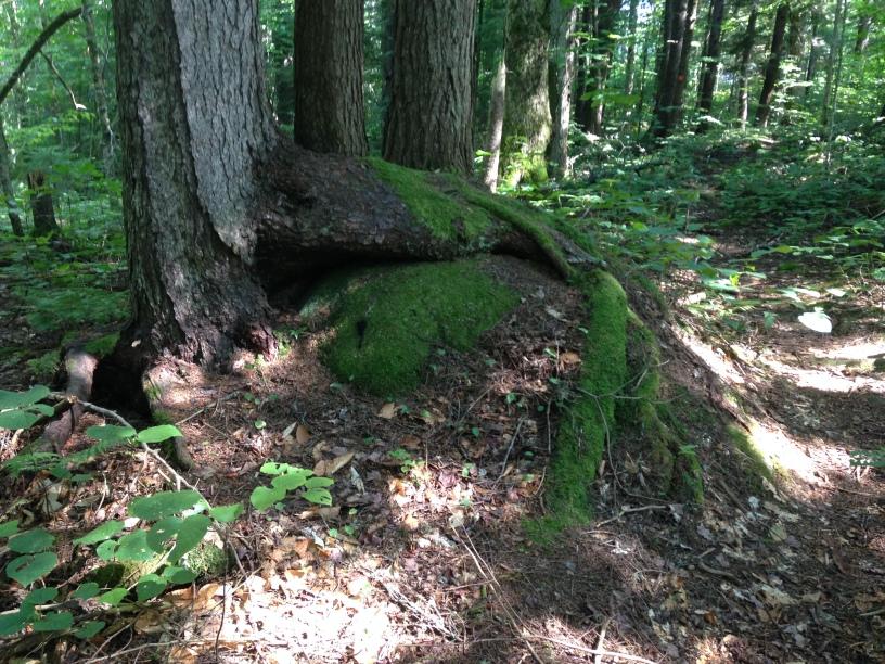 Nature overcoming