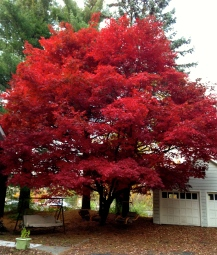 Nature's Vibrant Red Beauty