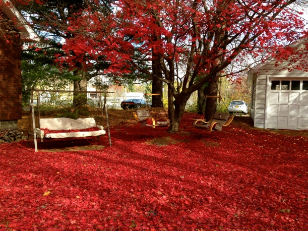 Ground carpeted in red!