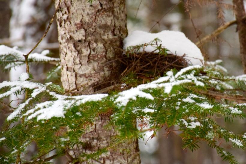 Birds nest waiting for spring