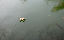The lonely leaf skating across the lake