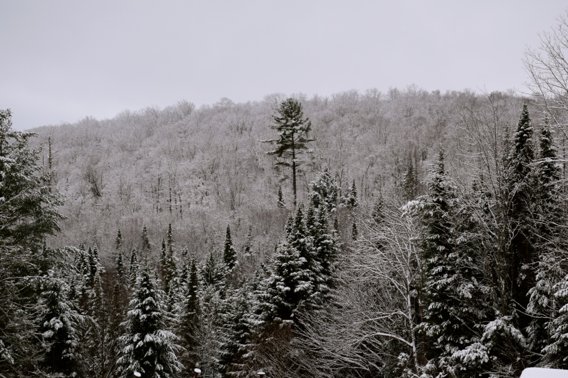 Snow covering trees in Adirondacks