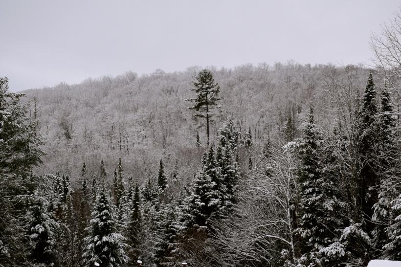 Snow covering trees in Adirondacks