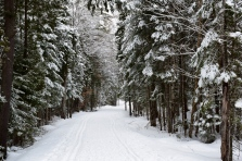 Cross-Country Ski Trail through Santanoni Preserve