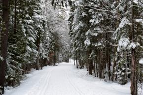 Cross-Country Ski Trail through Santanoni Preserve