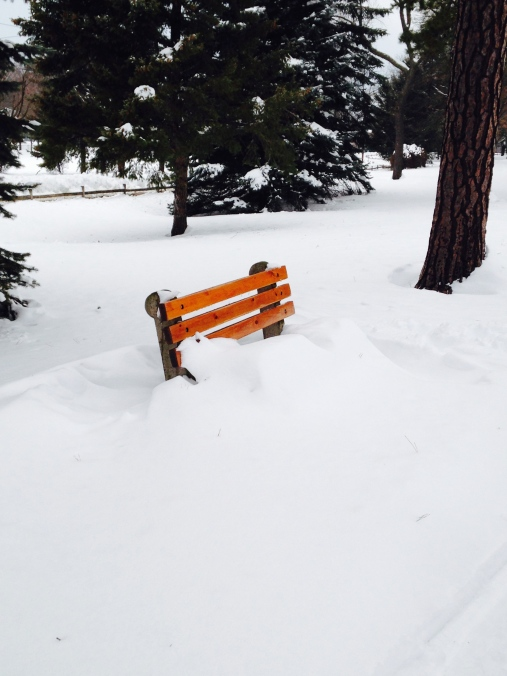 A bench waiting for spring
