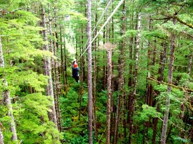 Ziplining in Juneau Alaska Rain Forest Canopy