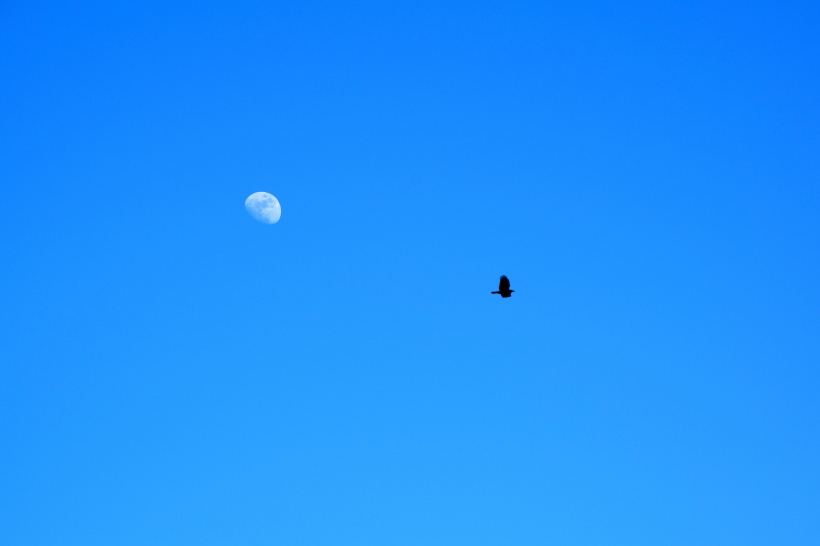 A shot of the moon and bird in flight
