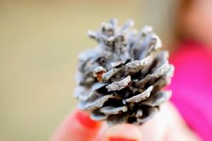 Em's pinecone