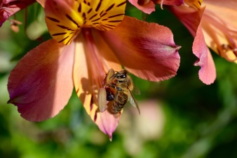 Life giving nature of bees