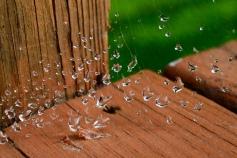 Weightless - dew on spider's web