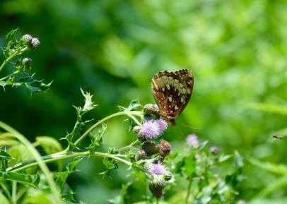 Butterfly balancing - appears to be weightless