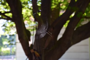 Natures Art - the shine of a fresh spiders web