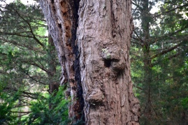 Looks a little like a face on this tree