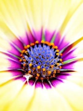 ornate flower