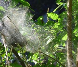 Natures webs
