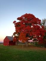 Saratoga National Historical Park in Autumn