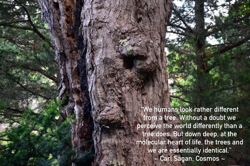 Trees - Carl Sagan quote