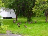 Home in Niskayuna, NY