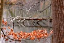 Albany Pine Bush Preserver