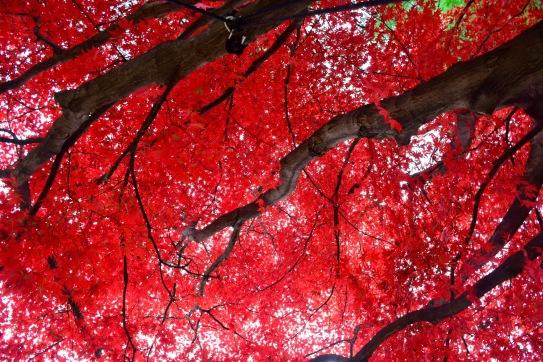 Earth's vibrant color canopy