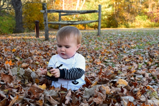 Grandson investigating the leaves