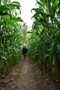 Corn Maze - Manchester, VT