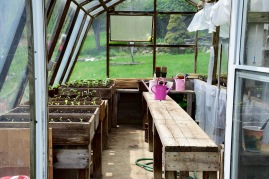 Green house with seedlings