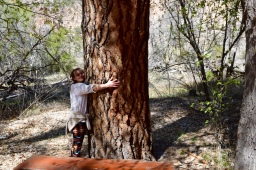 Granddaughter hugging trees in New Mexico
