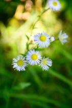 Some tiny flowers