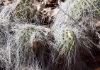 Cactus in NM