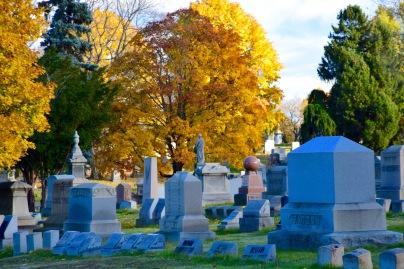 Glow of autumn trees