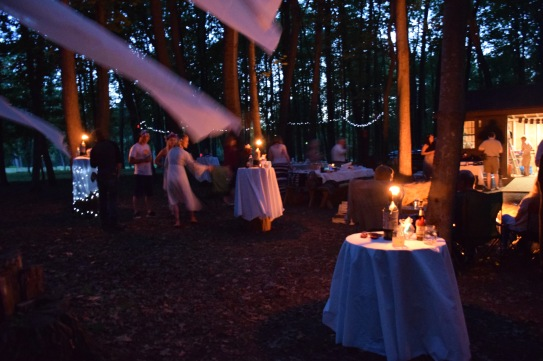 Enchanting evening in the woods